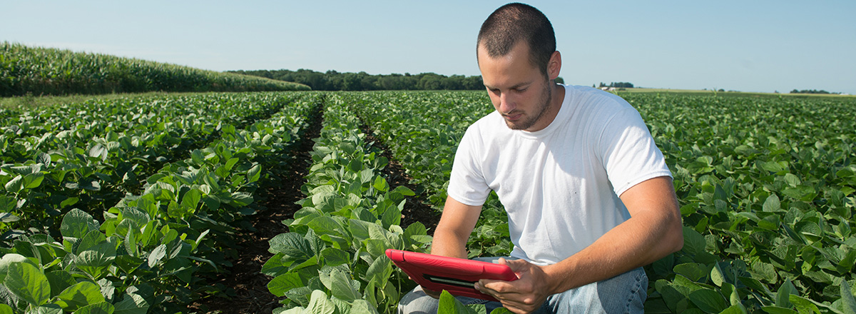 Students in bean field using ipad