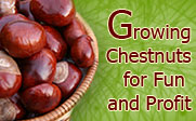 Growing Chestnuts for Fun and Profit - March 25, 2008 at 2:30pm on the third floor of the Malpass Library.