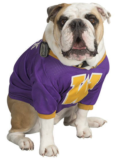 Colonel Rock mascot bulldog